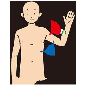 大胸筋の筋力テスト